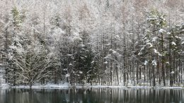 御射鹿池の樹氷3
