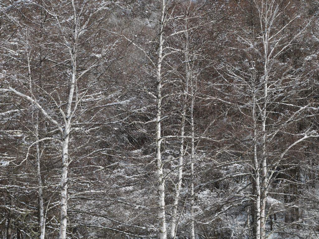 御射鹿池の樹氷4