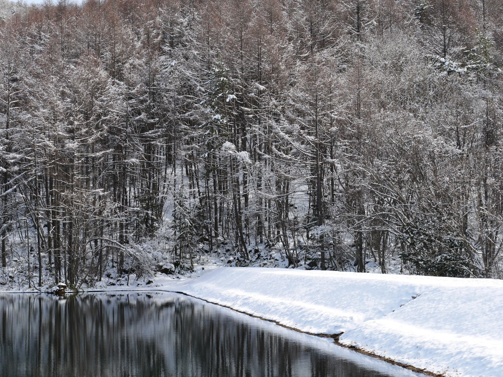 御射鹿池の樹氷11