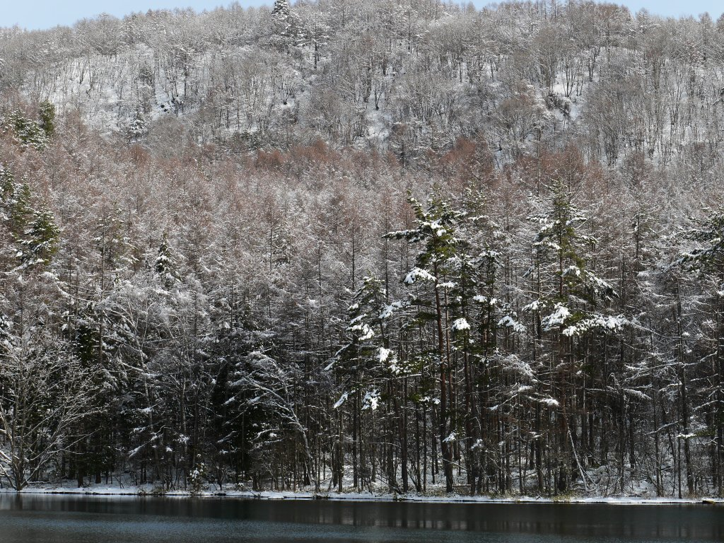 御射鹿池の樹氷10