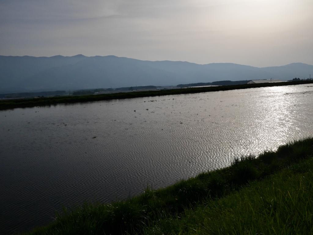 水田の水面