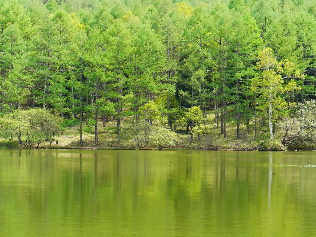 千代田湖の新緑1