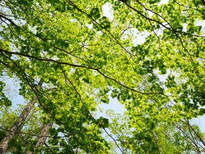 八千穂高原の新緑5