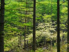 八千穂高原の新緑3