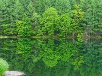 緑響く御射鹿池1