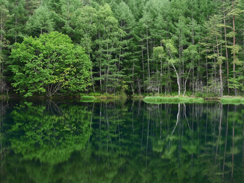 緑響く御射鹿池3