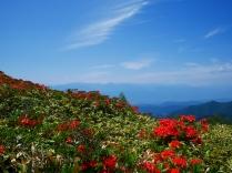 美ヶ原のレンゲツツジと北アルプス