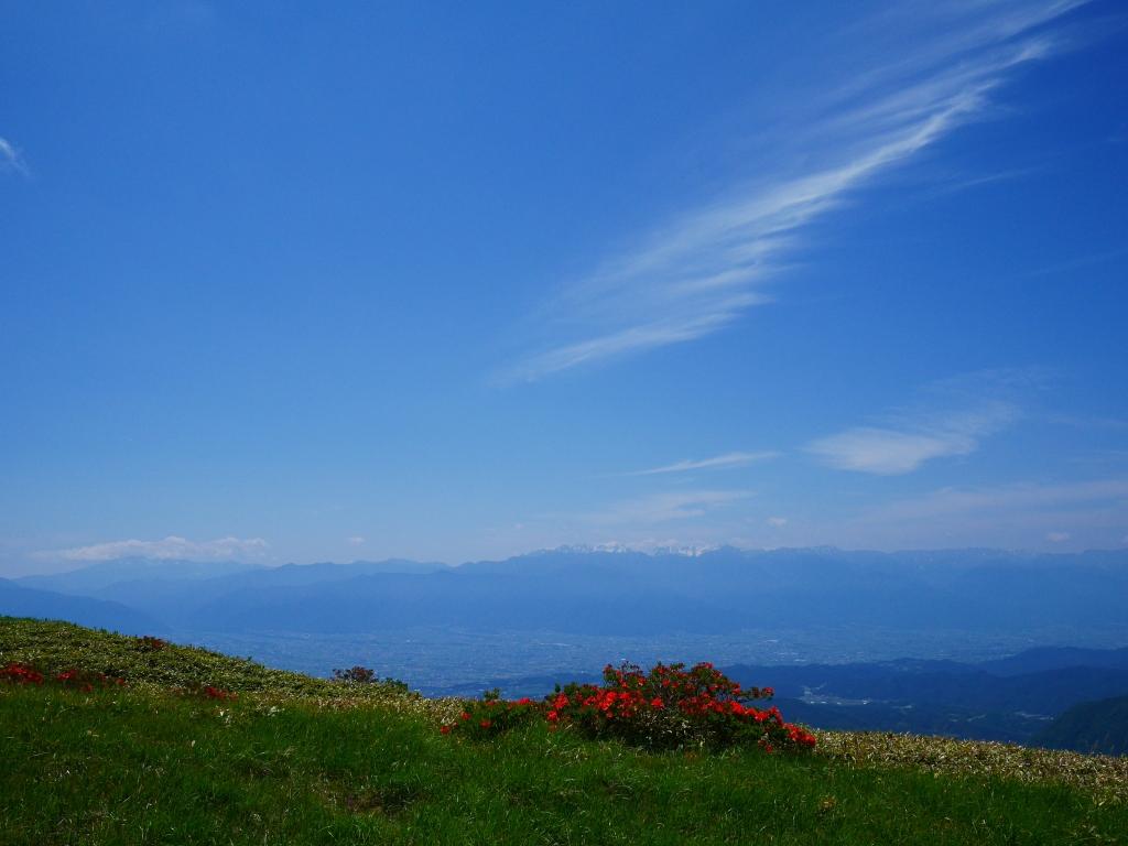 美ヶ原のレンゲツツジと北アルプス2