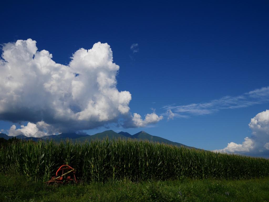 トウモロコシ畑と八ヶ岳2