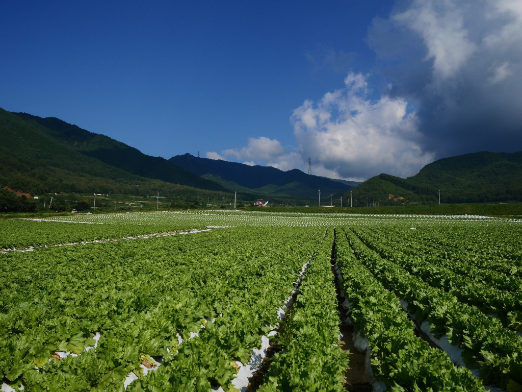 信州峠の高原野菜畑3