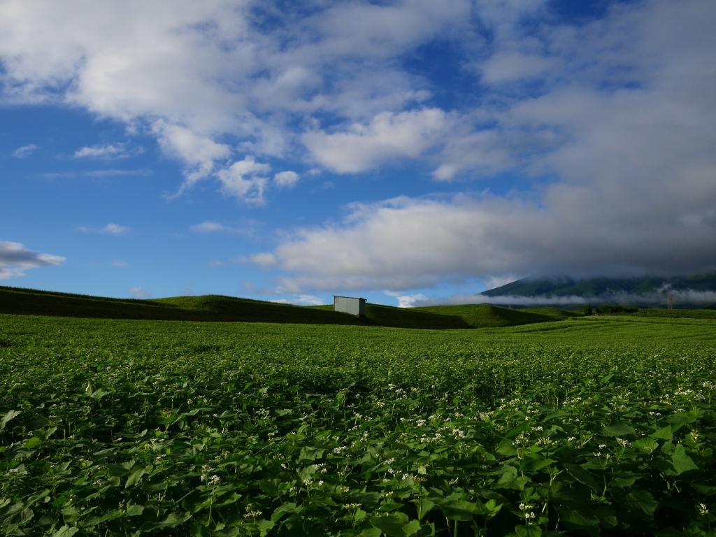 台風前の蕎麦畑にて1
