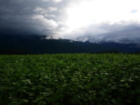 台風前の蕎麦畑にて(2016.8.28)