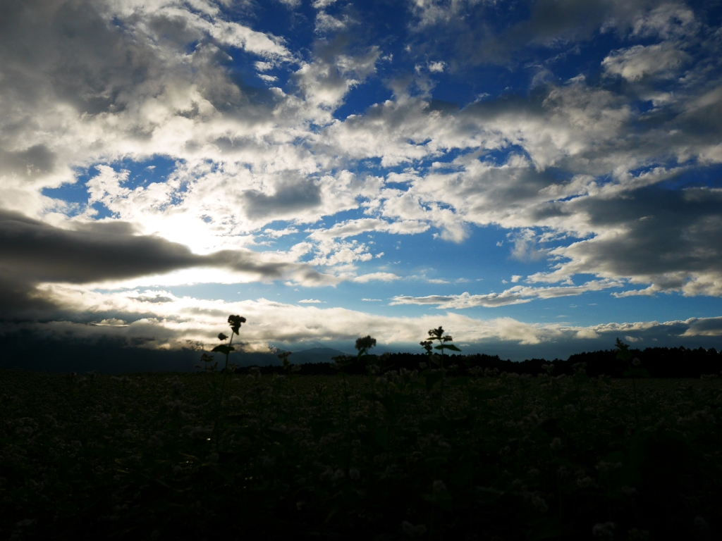台風前の蕎麦畑にて6