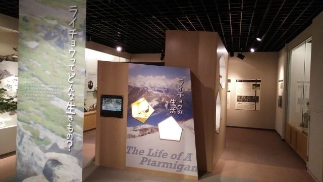 大町山岳博物館ライチョウ解説展示1