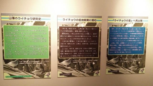 大町山岳博物館ライチョウ解説展示2