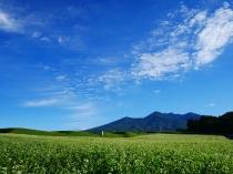 朝の蕎麦畑1