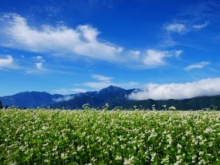 朝の蕎麦畑3
