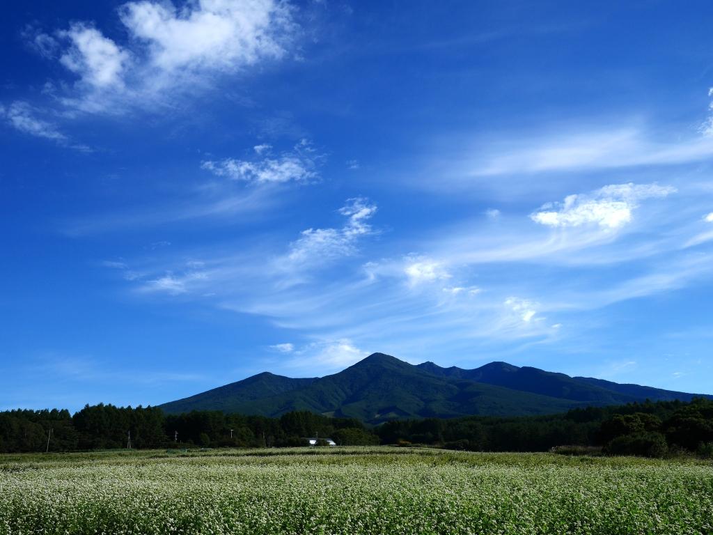 朝の蕎麦畑4