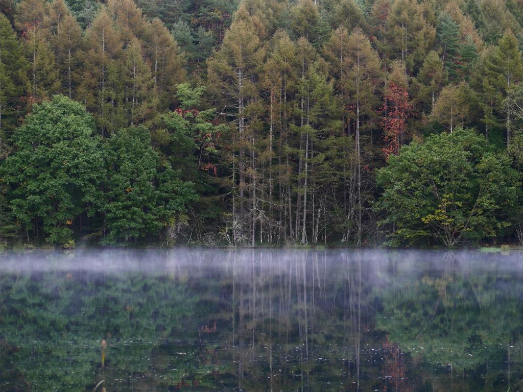 朝霧の御射鹿池4