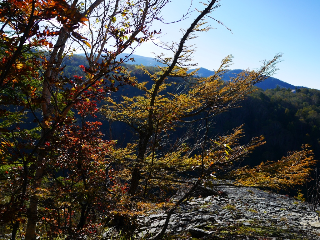 秋の鹿曲川渓谷遠望3