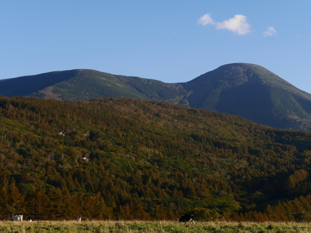 秋の蓼科牧場