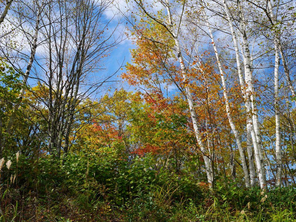 野辺山の紅葉2