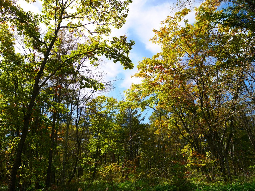 野辺山の紅葉1