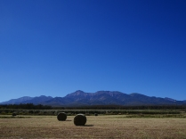 昼下がりの牧草地より八ヶ岳遠望