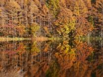 西日を浴びる晩秋の御射鹿池1