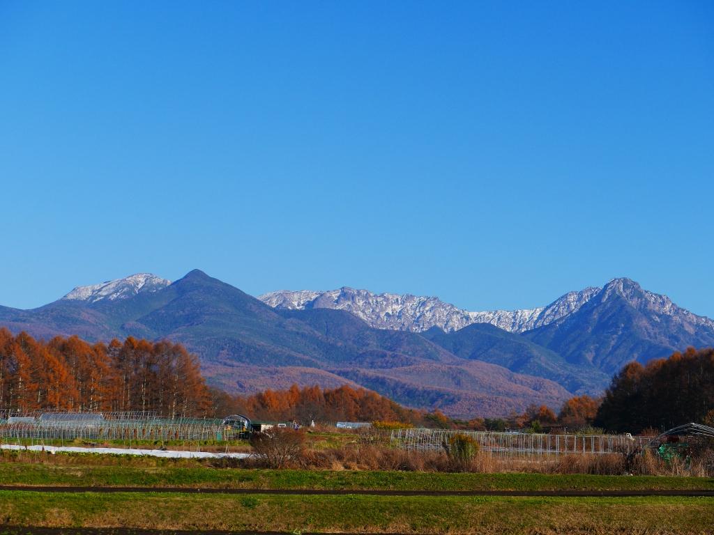落葉松の黄葉と雪を戴く八ヶ岳1