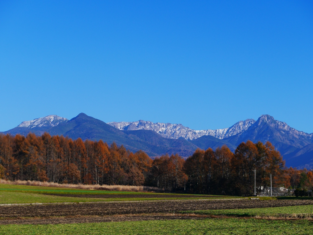 落葉松の黄葉と雪を戴く八ヶ岳2