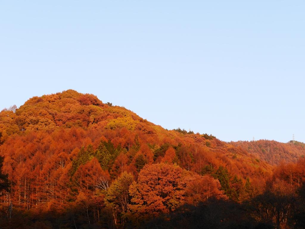 落葉松色に染まる森4