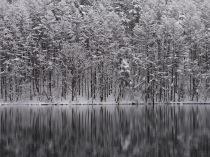 4月の雪、御射鹿池8