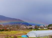 虹と桜並木