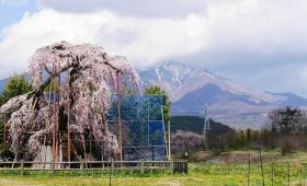 山里の春はゆっくりと八ヶ岳の山裾を駆け上がる(2017.4.10~19)