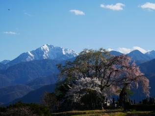 田端の枝垂桜2017_24