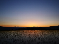 夕映えの圃場3