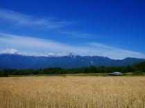 麦秋の空2