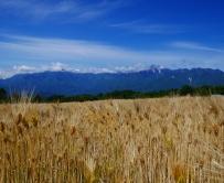 麦秋の空1
