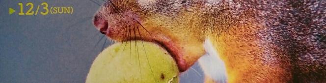 八ヶ岳の麓に「生きる」を子供たちに伝え続けて(自然写真家、西村豊さんの個展「八ヶ岳 生きもの ものがたり」)2017.7.9