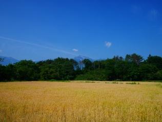 麦秋の空3