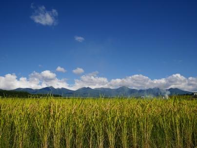 稲穂と八ヶ岳3