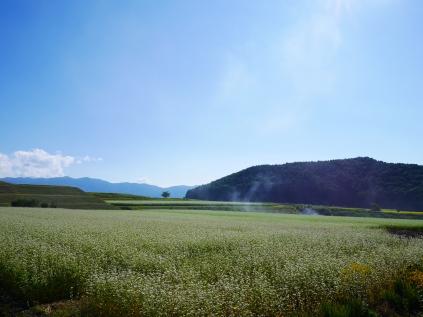 午後の蕎麦畑