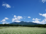 蕎麦の花と八ヶ岳