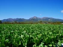 高原野菜と秋の八ヶ岳