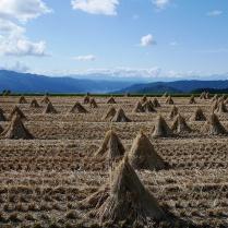 藁の笠と諏訪の山々