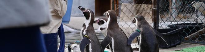 ちょっと寄り道(小諸市動物園のフンボルトペンギンたち)2018.3.3