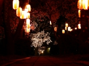 深叢寺の夜桜