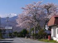 信濃境、高森の桜1