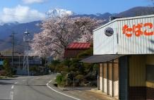 信濃境、高森の桜2